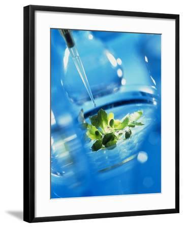 Culturing Genetically Engineered Plant Seedlings-Tek Image-Framed Photographic Print