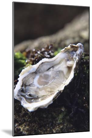 Oyster-Veronique Leplat-Mounted Photographic Print