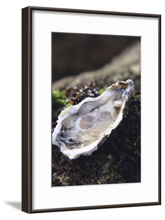 Oyster-Veronique Leplat-Framed Photographic Print