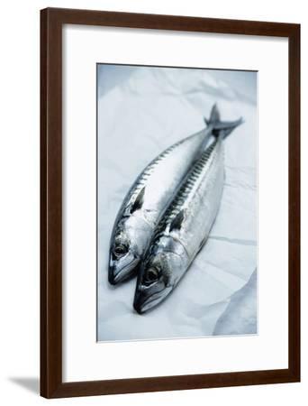Mackerel-Veronique Leplat-Framed Photographic Print