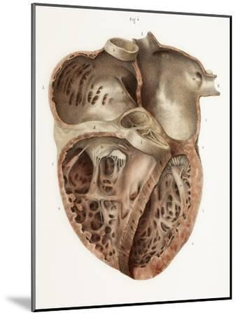 Heart Anatomy, 19th Century Illustration-Science Photo Library-Mounted Photographic Print
