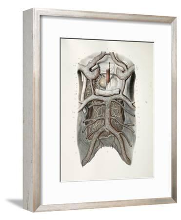 Circle of Willis Nerves, 1844 Artwork-Science Photo Library-Framed Photographic Print
