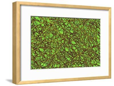 Microtubules, SEM-Science Photo Library-Framed Photographic Print