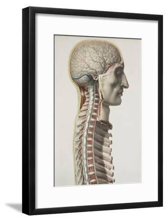 Brain And Spinal Cord, 1844 Artwork-Science Photo Library-Framed Photographic Print