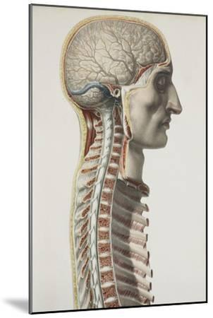 Brain And Spinal Cord, 1844 Artwork-Science Photo Library-Mounted Photographic Print