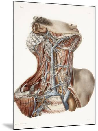 Neck Anatomy, 19th Century Artwork-Science Photo Library-Mounted Photographic Print