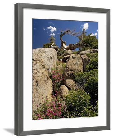 Granite Outcrop-Bob Gibbons-Framed Photographic Print