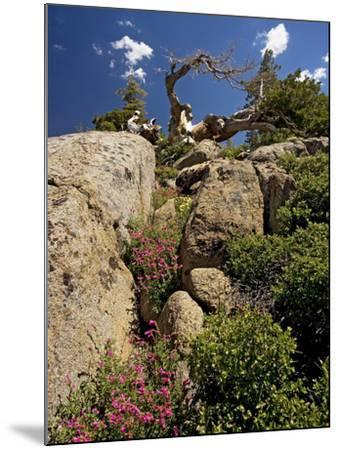 Granite Outcrop-Bob Gibbons-Mounted Photographic Print