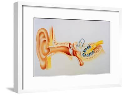 Illustration of the Anatomy of the Human Ear-David Gifford-Framed Photographic Print