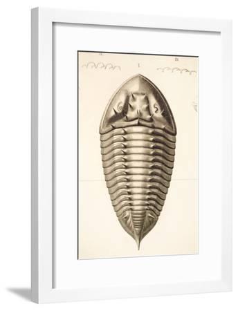 1846 Fine Victorian Trilobite Lithograph-Paul Stewart-Framed Photographic Print