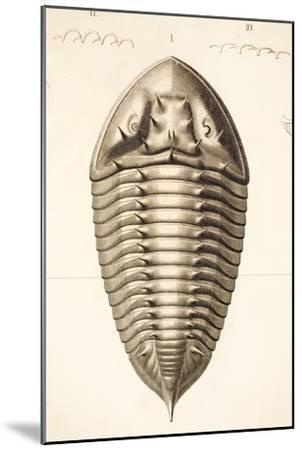 1846 Fine Victorian Trilobite Lithograph-Paul Stewart-Mounted Photographic Print