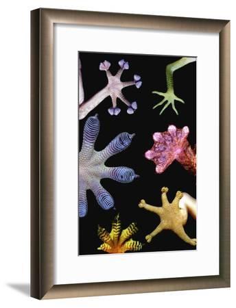 Gecko Feet Diversity-Paul Stewart-Framed Photographic Print