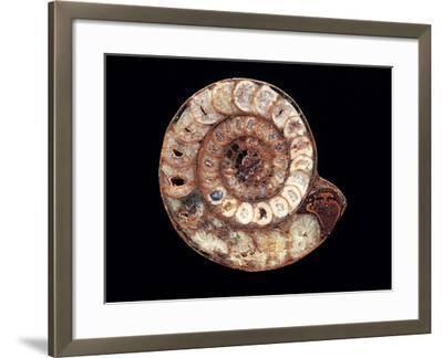 Ammonite Fossil-Kaj Svensson-Framed Photographic Print