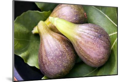 Brown Turkey Figs-Sheila Terry-Mounted Photographic Print