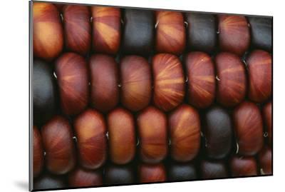 Sweetcorn Grains-Kaj Svensson-Mounted Photographic Print