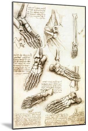 Foot Anatomy by Leonardo Da Vinci-Sheila Terry-Mounted Photographic Print