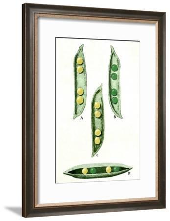 Mendel's Peas-Sheila Terry-Framed Photographic Print