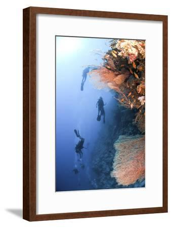 Coral Reef Red Sea, Ras Mohammed--Framed Photographic Print