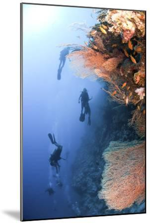 Coral Reef Red Sea, Ras Mohammed--Mounted Photographic Print