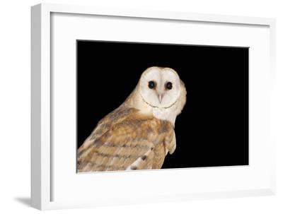 Barn Owl At Night--Framed Photographic Print