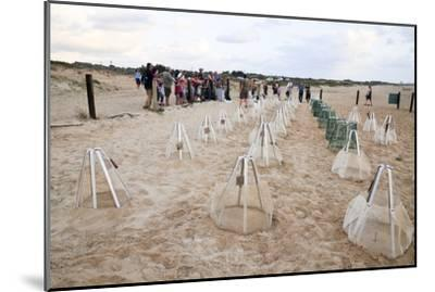 Green Turtles' Hatching Site, Israel--Mounted Photographic Print