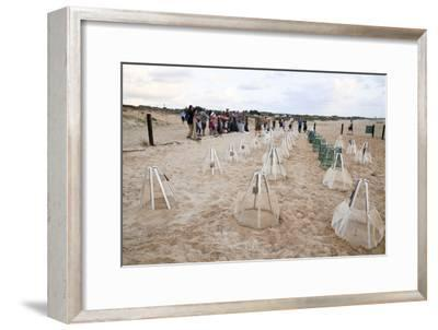 Green Turtles' Hatching Site, Israel--Framed Photographic Print