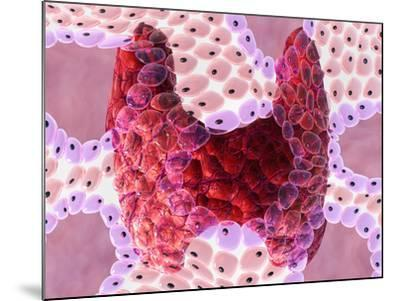 Thyroid Follicles-David Mack-Mounted Photographic Print
