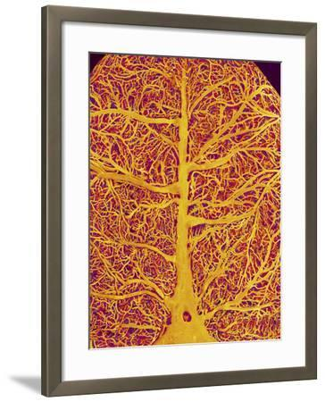 Rat Brain Blood Vessels, SEM-Susumu Nishinaga-Framed Photographic Print
