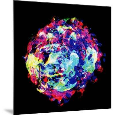 Embryo, Light Micrograph-Dr. Gopal Murti-Mounted Photographic Print