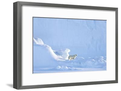 Polar Bear-Louise Murray-Framed Photographic Print