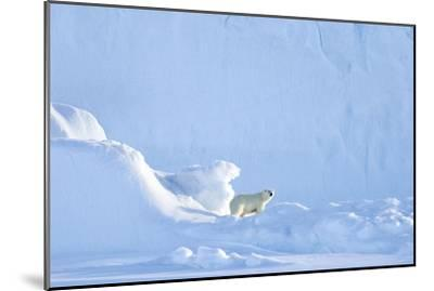 Polar Bear-Louise Murray-Mounted Photographic Print