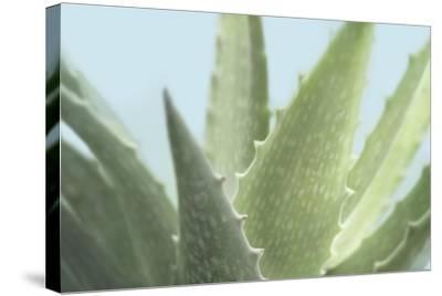 Soft Focus Succulent 1-Julie Greenwood-Stretched Canvas Print