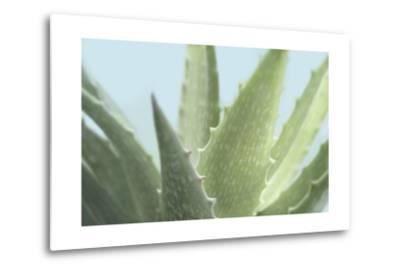 Soft Focus Succulent 1-Julie Greenwood-Metal Print