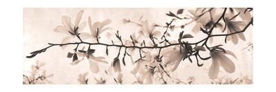 Dreaming in Spring-Heather Johnston-Framed Art Print