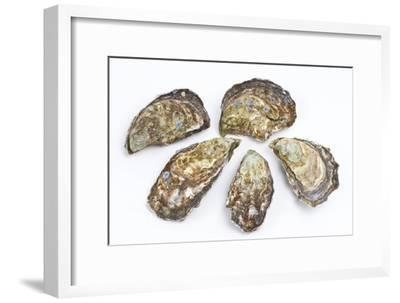 Pacific Oysters-David Nunuk-Framed Photographic Print