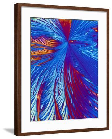 Cholesterol Crystals-PASIEKA-Framed Photographic Print