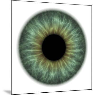 Eye-PASIEKA-Mounted Photographic Print