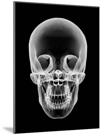 Human Skull, X-ray Artwork-PASIEKA-Mounted Photographic Print
