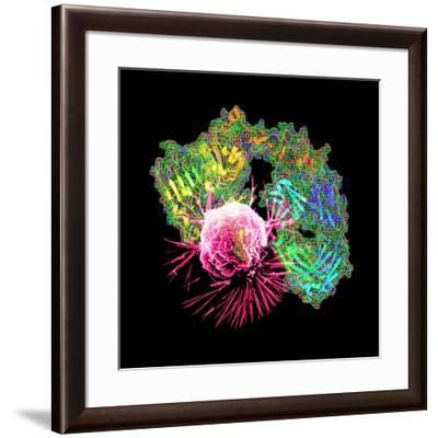 Herceptin Drug And Breast Cancer Cell-PASIEKA-Framed Photographic Print