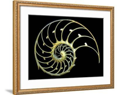 Sectioned Shell of a Nautilus-PASIEKA-Framed Photographic Print