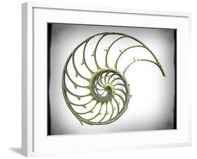 Sectioned Shell of a Nautilus, Artwork-PASIEKA-Framed Photographic Print