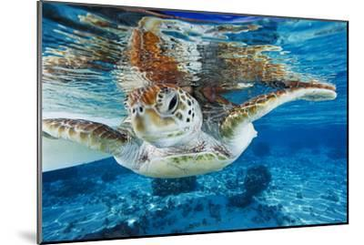 Green Turtle-Alexis Rosenfeld-Mounted Photographic Print