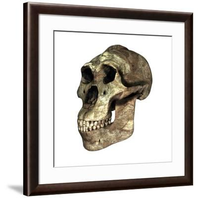 Australopithecus Boisei Skull-Friedrich Saurer-Framed Photographic Print
