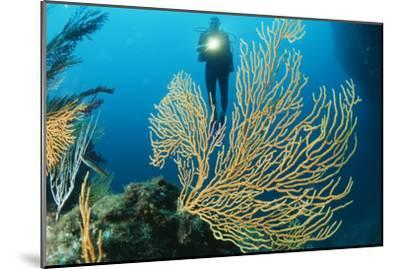 Sea Fan-Alexis Rosenfeld-Mounted Photographic Print