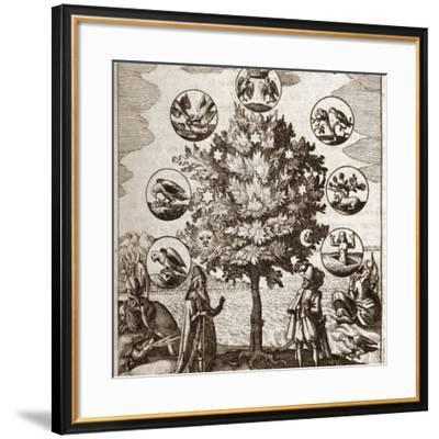 Alchemical Tree, Philosophia Reformata-Middle Temple Library-Framed Photographic Print