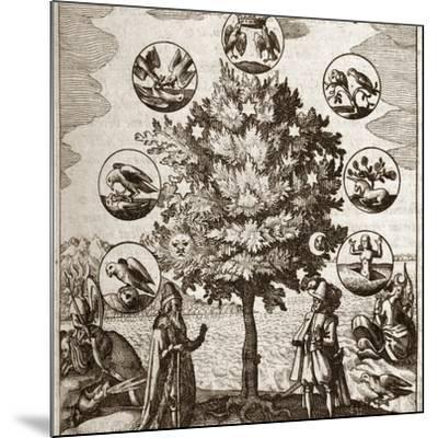 Alchemical Tree, Philosophia Reformata-Middle Temple Library-Mounted Photographic Print