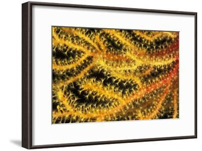 Sea Fan-Alexis Rosenfeld-Framed Photographic Print