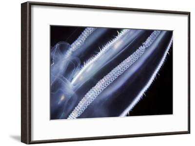 Comb Jelly, Close Up-Alexander Semenov-Framed Photographic Print