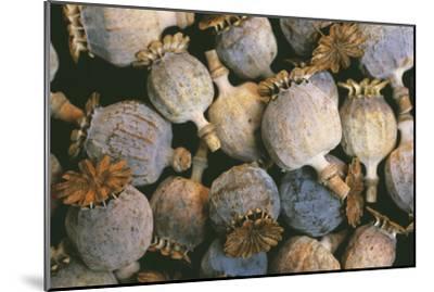 Dried Opium Poppies-Alan Sirulnikoff-Mounted Photographic Print