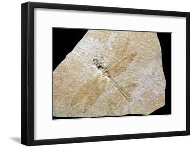 Dragonfly Fossil-Dirk Wiersma-Framed Photographic Print